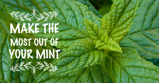 Make-the-most-out-of-your-Mint