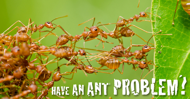 Have an Ant Problem?