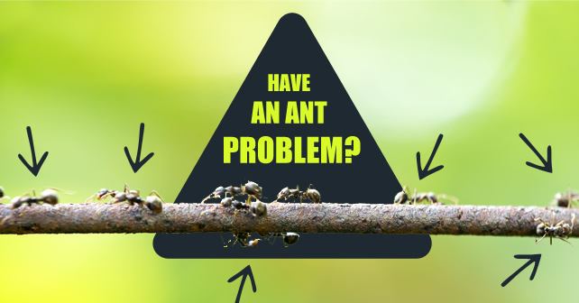Have-an-Ant-Problem