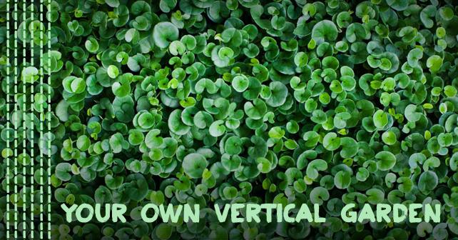 Your Own Vertical Garden 2